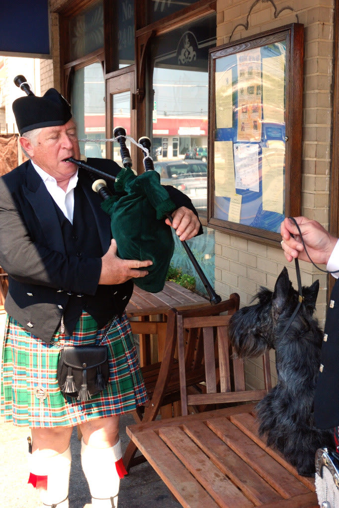 Shirescot Jenny Scottish Terrier Bagpipes