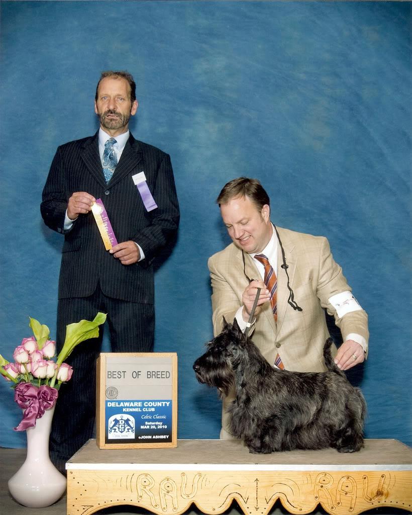Champion Shirescot Scottish Terriers Show Dog Scottie