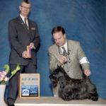Shirescot Jenny Handler Show Professional Breeder Scottish Terrier