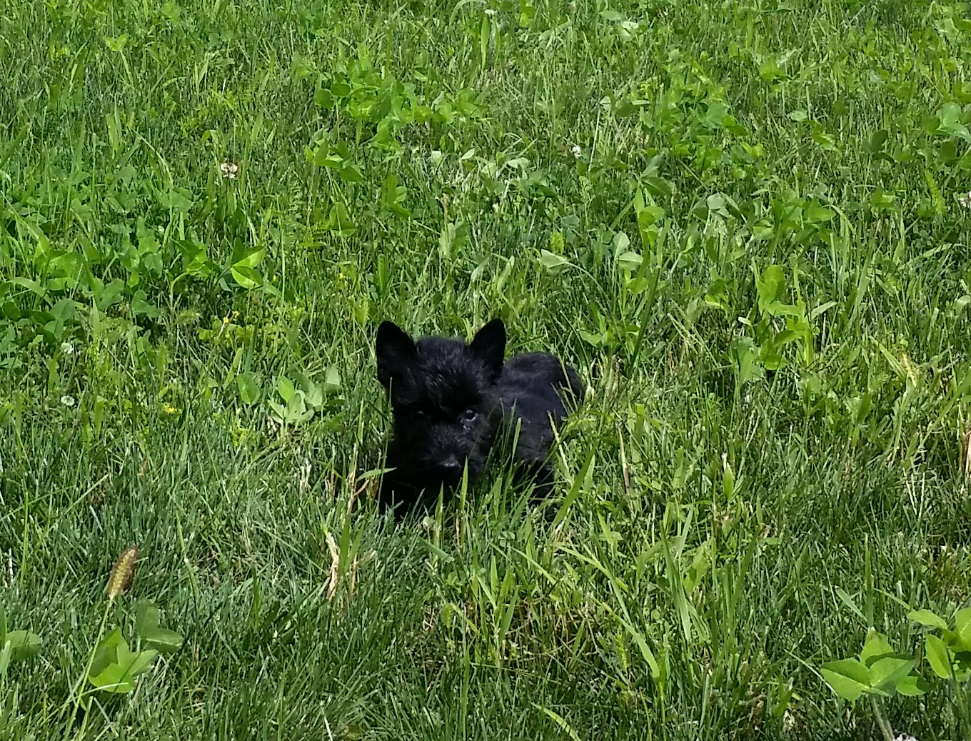 Moira's Puppies - This is Little Man in Grass